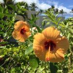 Top 5 Tuesday - Sharon's Maui Picks