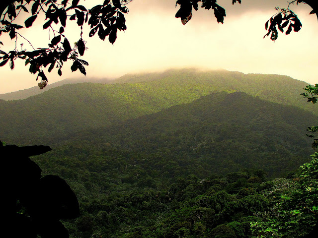 Explore the Caribbean rainforest by hiking in El Yunque.