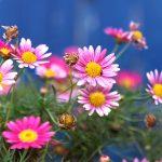 Best Botanical Gardens in the U.S.